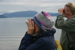 Passengers scan the fjords for porpoises and sea eagles