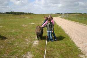 Kids making friends with a 4 legged inhabitant on the island of Fano in Denmark