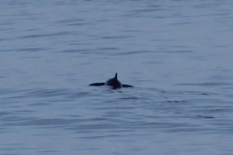 Porpoise were regularly spotted on our last sailing from Newcastle