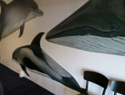 New wall design in the new ORCA Centre of North Sea species (top left - Bottlenose Dolphin, Centre - White-beaked Dolphin, right - Minke Whale)