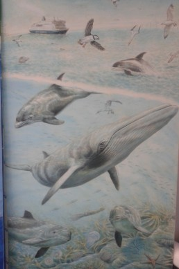 Rory McCann's cetacean art mural donated to the new ORCA Centre