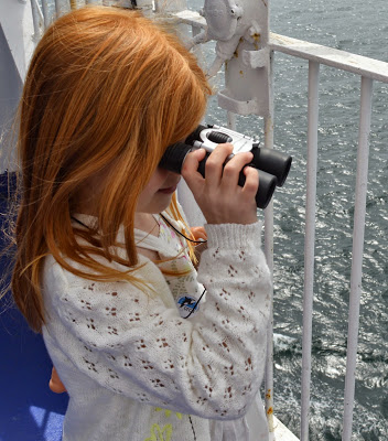 Searching for dolphins in the North Sea aboard DFDS Seaways