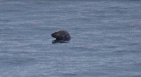 Seal 2 30.08