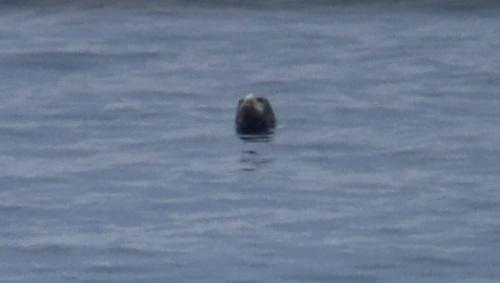 Seal 30.08