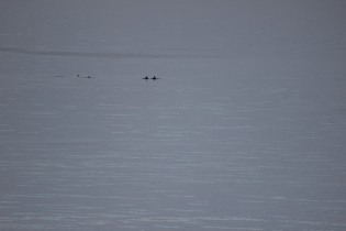 Just some of the cetaceans we saw on Wednesday evening!