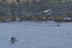 Some grey seals spotted from the boat
